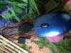 Мышь оптическая, проводная