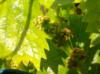 Удобрение для винограда «Дачная сотка»