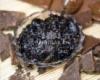 Шоколадно-анисовый джем для умывания Спивакъ