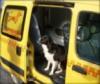 Такси для животных Одесса-Киев