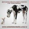 Качественная дрессировка собак  всех пород и возрастов