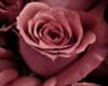Масло Жожоба Голден и Абсолют Розы