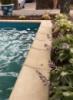 Камень для бассейна