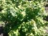 Дачная Сотка, удобрение для ягодных культур