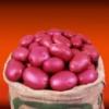 Семенной картофель Кристина (1 репр. Голландия)