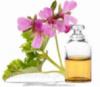 Эфирное масло герани - Антисептическое, бактерицидное, заживляющее средство