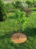 Круг приствольный кокосовый для мульчирования почвы