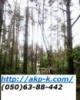 Аварийный спил деревьев 0506388442 , удаление аварийных деревьев Киев. Подрезка деревьев