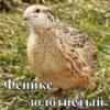 инкубационные яйца перепела породы Феникс золотистый