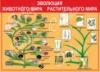 Стенд «Эволюция. Животного мира. Растительного мира»