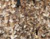 Грибы белые сухие 2-й сорт (100гр.)
