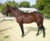 Прокат лошадей , конные прогулки и обучение верховой езде