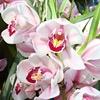 Орхидея ( ветка)