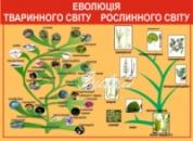 Стенд «Еволюція тваринного світу, Еволюція рослинного світу»