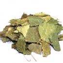 Берёза (лист)