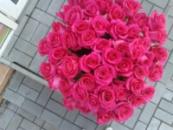 51 розовая роза (80см) импорт