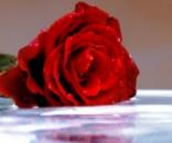 Цветочная вода Розы Органик