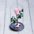 Стабилизированная роза в колбе Lerosh - Mini 27 см, Розовая