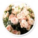 Штамбовая роза Сара