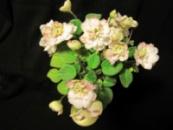 Pink Mint (S.Sorano)