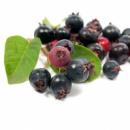 Ирга Канадская. Полезные свойства ягоды.