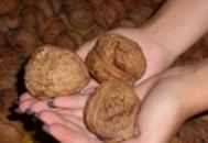 Грецкий орех Великан(привитый)