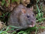 Уничтожение мышей в Днепродзержинске