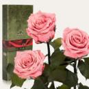 Три долгосвежих розы Розовый Кварц в подарочной упаковке (не вянут от 6 месяцев до 5 лет)