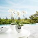 Горшок для орхидей ТМ Eva Solo