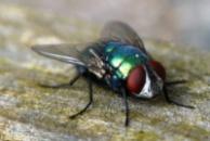 Уничтожаем мух в Днепропетровске