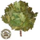 Веник для бани «Канадский дуб»