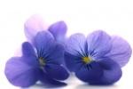 Семена других двулетних цветов