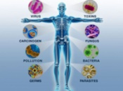 Препараты для укрепления иммунной системы