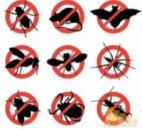 Дезинфекция от тараканов в Днепропетровске