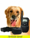 Ошейник для дресировки собак Remote Dog Training