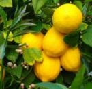 Лимон Сладкий пунш