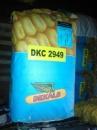 Семена кукрузы ДКС 2949