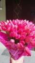 100 тюльпанів