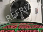 Заморозка ягод камеры статической заморозки