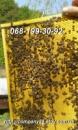 Пчелопакеты Карпатской пчелы 2018 г с доставкой по Украине. Есть в наличии