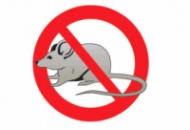 Уничтожение грызунов (Крыс, мышей ). Дератизация.