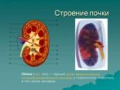 Препараты для почек и мочевыводящих путей