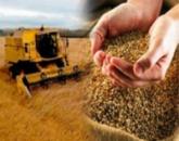 Насіння зернових культур