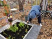 Расширенная уборка могилы на протяжении года в Александрии