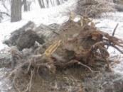 Удаление корней Донецк