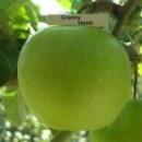 Яблуня «Гренні Сміт»