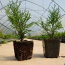 Растения в Р9
