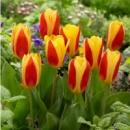 Ботанические, карлики, низкорослые