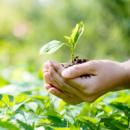 Средства защиты растений (СЗР) и биопрепараты