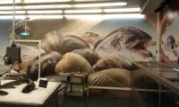 Монтаж рекламы в рыбном отделе в МЕТРО в Днепропетровске